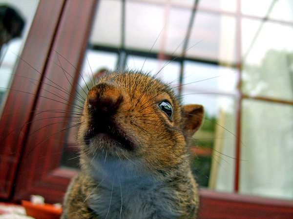 ...AND you are not allowed to worry squirrels