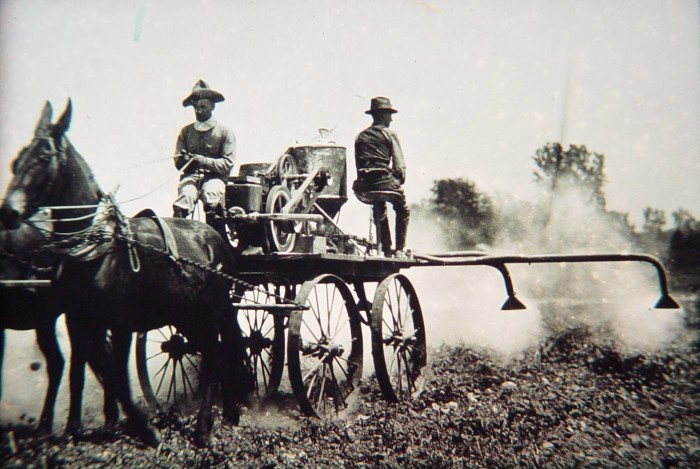 7. Workers on a Delta farm dusting cotton in order to prevent boll weevils.