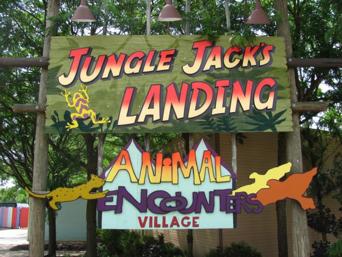 6) Jungle Jack's Landing (Powell)
