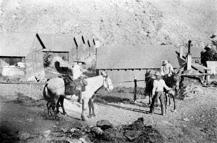 4. Here is a mule party leaving Hermit Camp in the Grand Canyon. (c. 1919)
