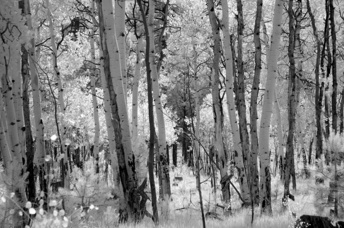 12. Another infrared photo, this time in Flagstaff.