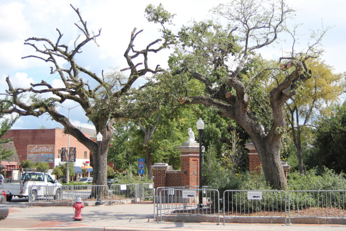 7.) The day of January 27, 2011 when Harvey Updyke, an Alabama football fan, called Paul Finebaum's national radio show to brag about poisoning Toomer's Oaks in Auburn. Updyke served 6 months in jail and was ordered to pay $800,000 for poisoning the trees.