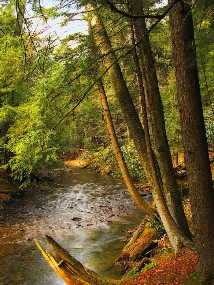 17. Cook Forest State Park, Clarion County