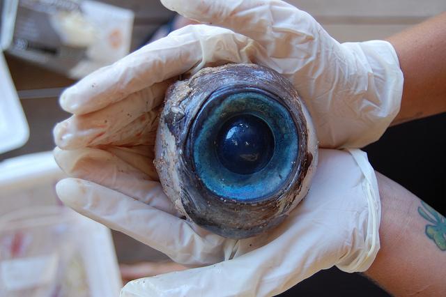 2. This Mystery Eyeball