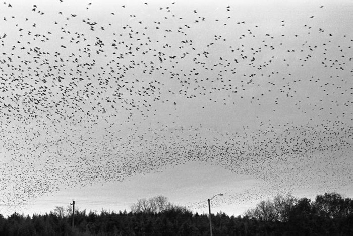 16. Hmmm....Birds. Is it the Hitchcock movie or an amazing sight?