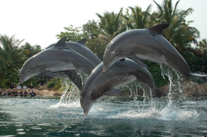6. Discovery Cove