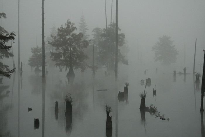 8. This foggy scene is the perfect setting for a horror movie.