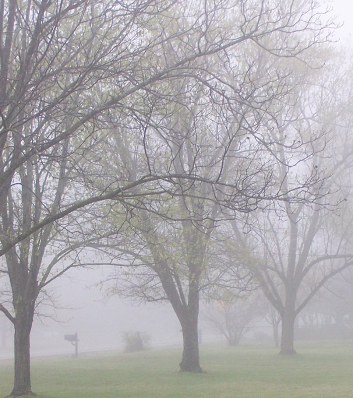11) Fog drapes the trees in Comer, Georgia.