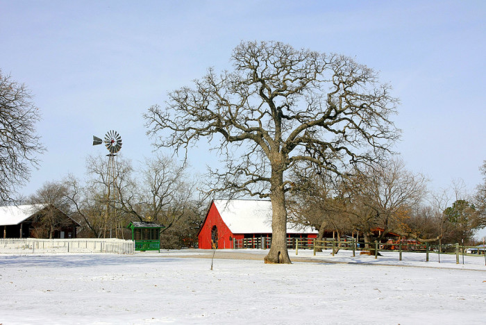 11) A cold winter day at Nash Farm in Grapevine.