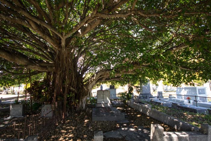 5. Key West Cemetery