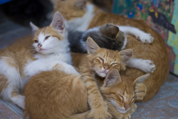 9) It is unlawful to hoard more than 15 dogs and cats in a home.