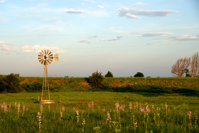 No Sight of the Farm, But This Windmill is a Stunner in This Colorful Field