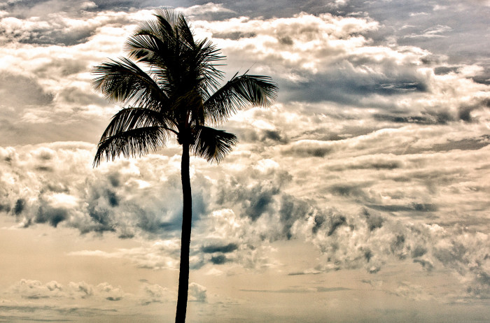 7. Palm trees are just cool. They make every scene better.