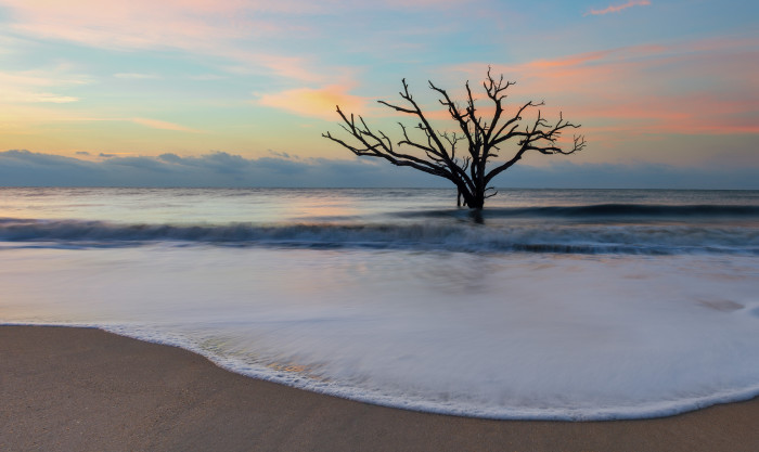 12. It can be quite mysteriously fantastical to see a tree in the ocean, but it's definitely weird.