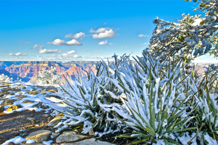 6. What about this image of yucca and other plants covered by snow?