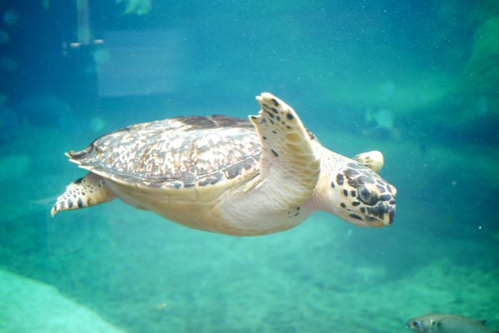7) Columbus Zoo and Aquarium and Zoombezi Bay