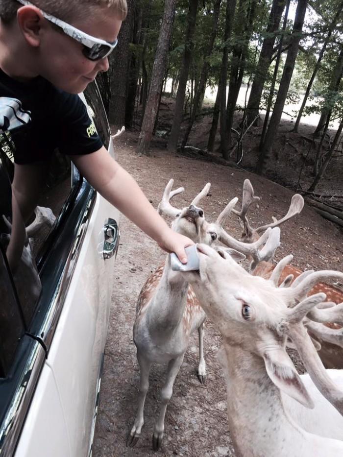 1. Harmony Park Safari - Huntsville, AL
