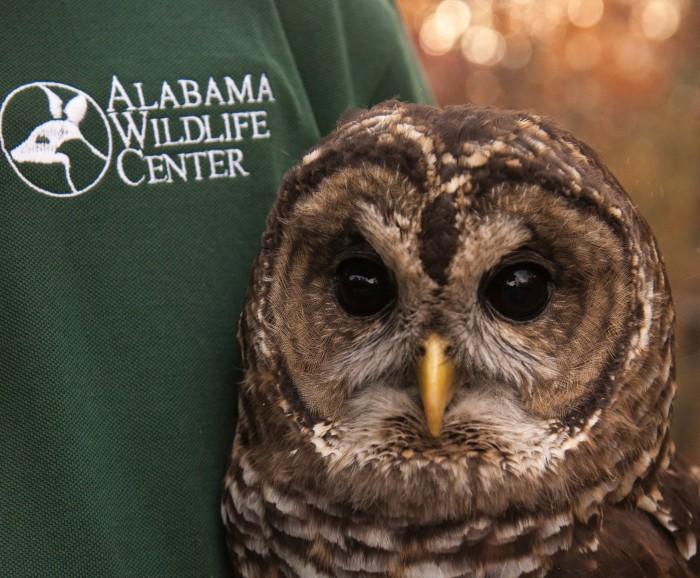3. Alabama Wildlife Center - Pelham, AL