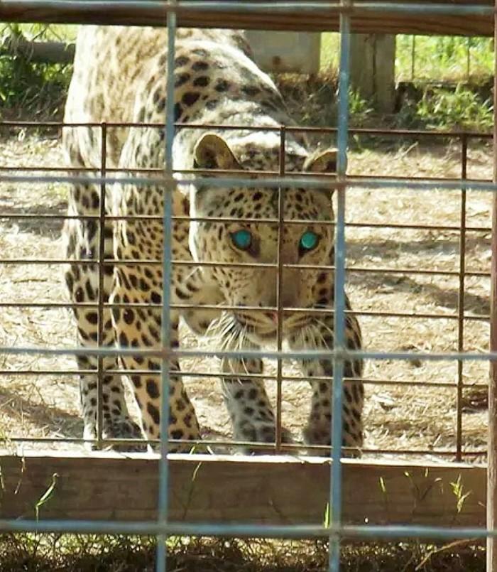 5. McClelland's Zoo - Banks, AL