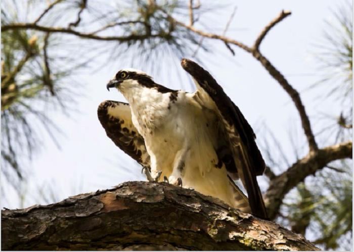 6. Audubon Bird Sanctuary - Dauphin Island, AL