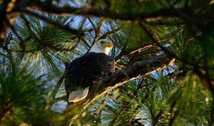 8. Bon Secour National Wildlife Refuge - Gulf Shores, AL
