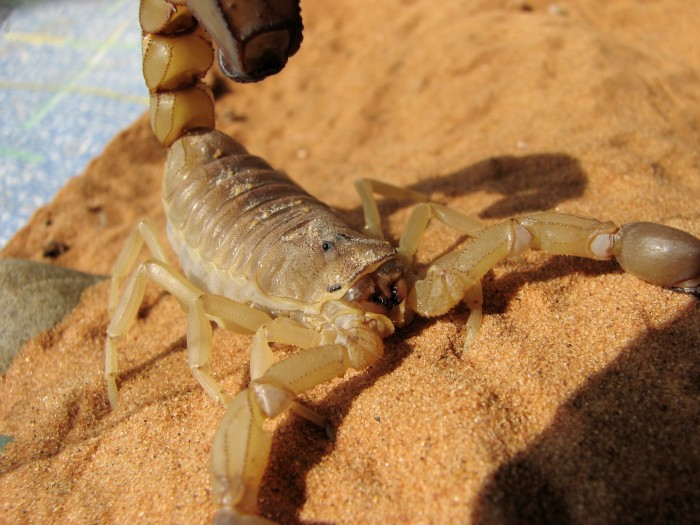 4. Scorpion