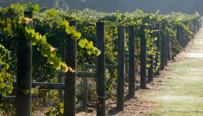 12. Tour one of Alabama's beautiful vineyards.