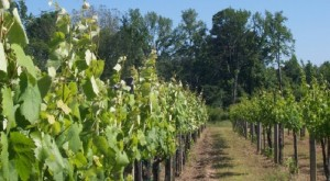 These 7 Beautiful Vineyards In Alabama Are A Must-Visit For Everyone