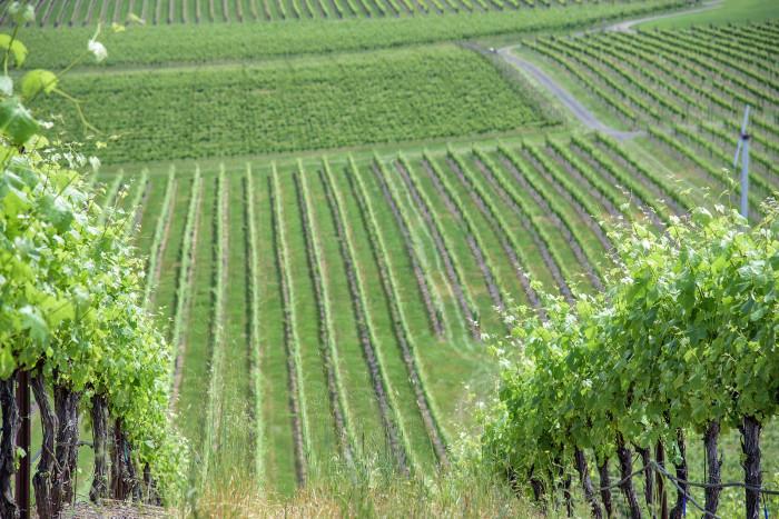 14) Abacela Vineyards & Winery, Roseburg