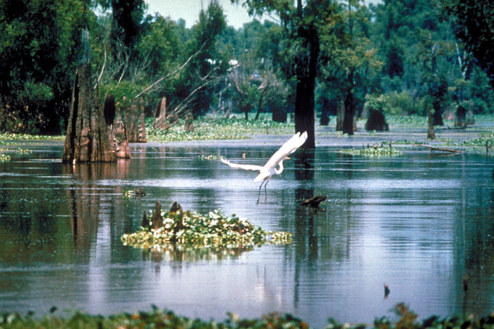 Atchafalaya River Basin Camping