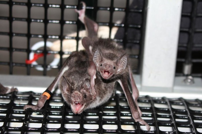 8) Bat Zone at the Cranbrook Institute of Science, Bloomfield Hills