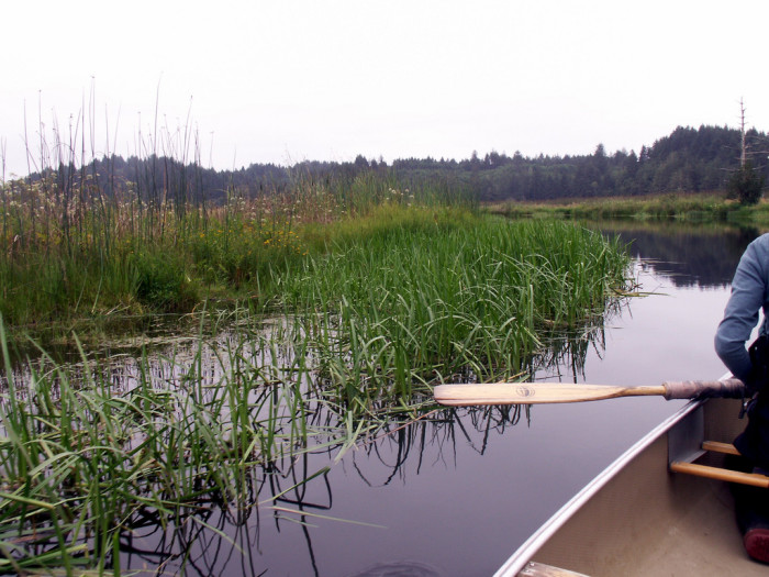 12) Beaver Creek State Park Natural Area near Newport