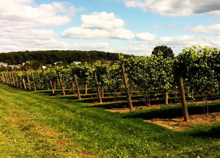 2. Beneduce Vineyards, Pittstown