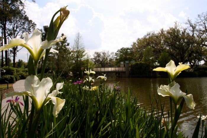 11. Besthoff Sculpture Garden, New Orleans, LA