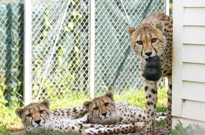 7) Binder Park Zoo, Battle Creek