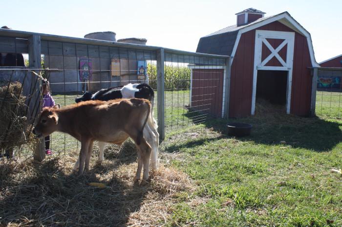 3) Blake's Farms, Armada