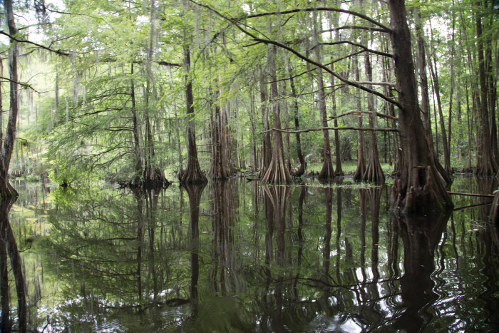 8. Chicot State Park