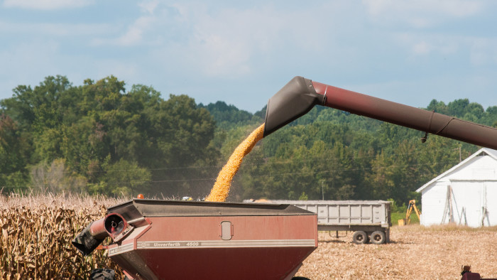 22. The Corn Harvest at Pleasant Level Farm in Hanover and King William Counties