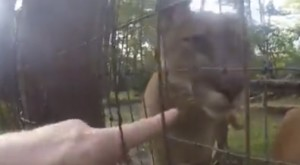 What This Man Did At An Ohio Zoo Was Astounding…And Caught On Video