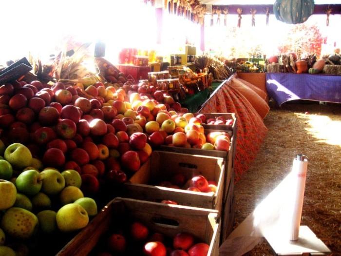 12. Harvest Bounty at Cox Farm, Centreville