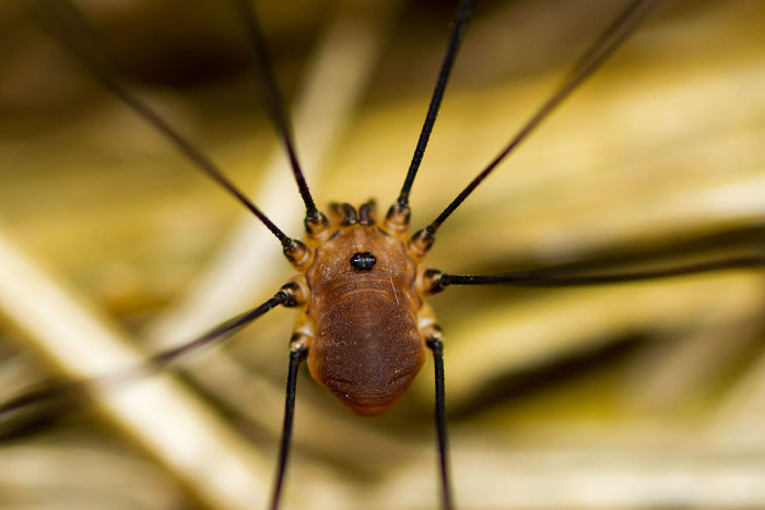 Wait. Daddy Longlegs don't creep you out? Oh. Ok, here's a close up.