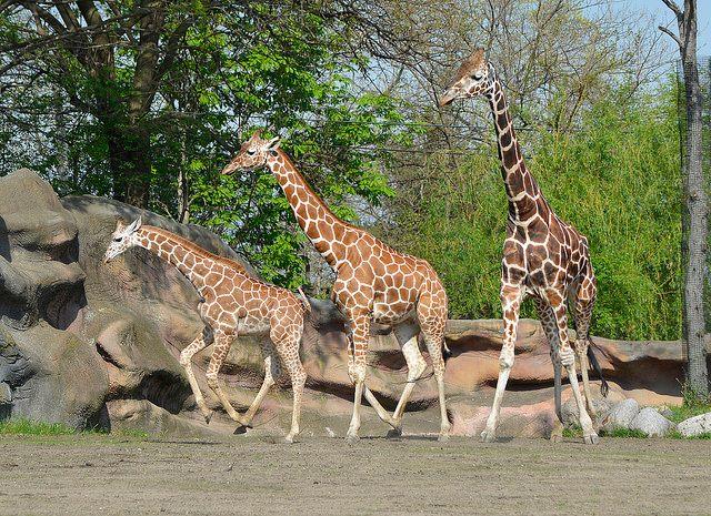 6) Detroit Zoo
