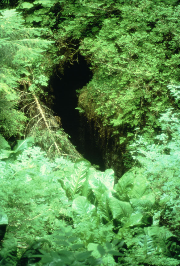 6) Devil's Canopy Cave