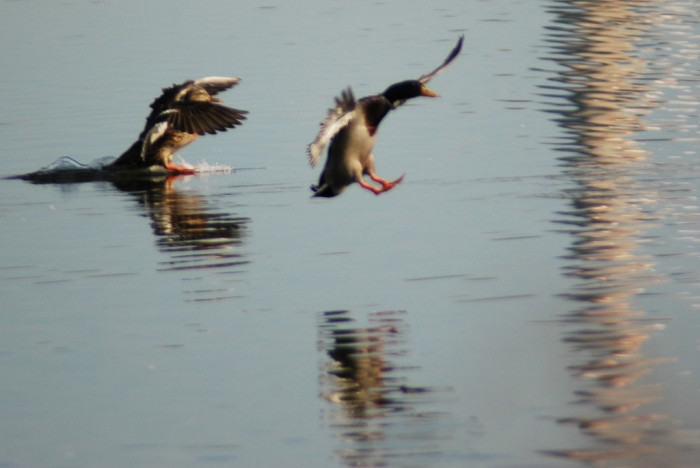 11) Coming in for a landing!