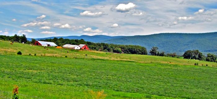 13. Farmland Vista in Luray