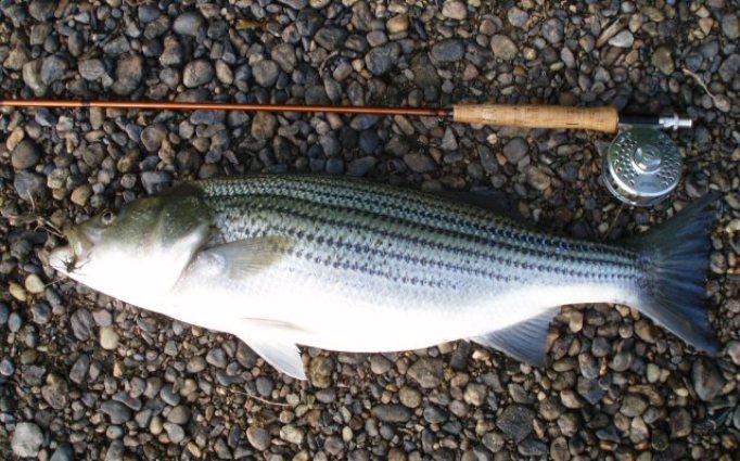 5. Fishtrap Lake