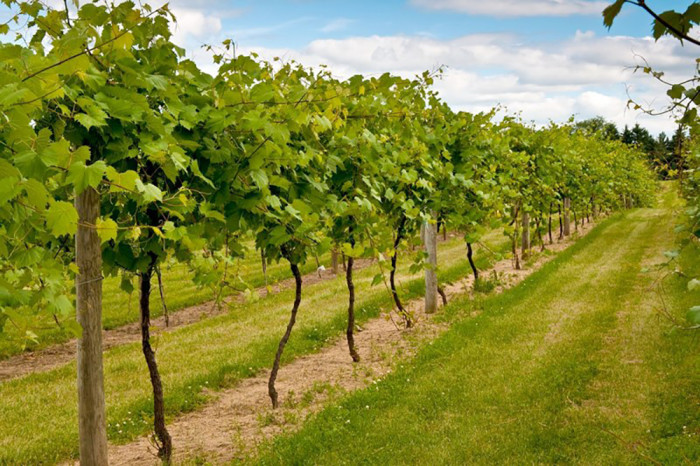 10. Saint Croix Vineyards in Stillwater. The fall season is full of fun events and amazing scenery here.