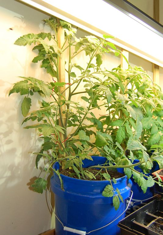2. Gardening