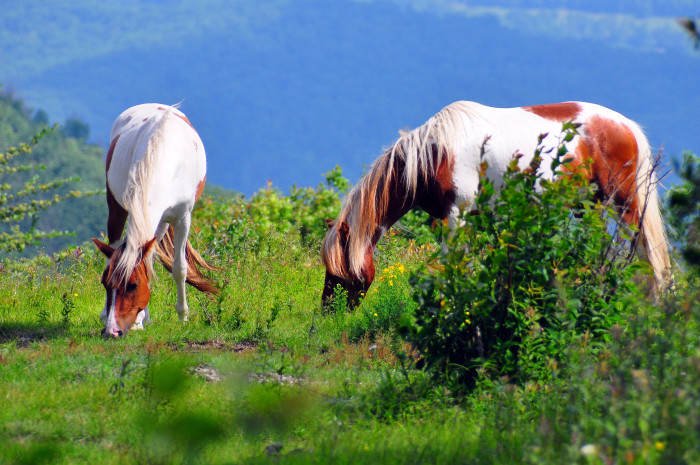 6. Mount Rogers National Recreation Area and Grayson Highlands State Park, Grayson
