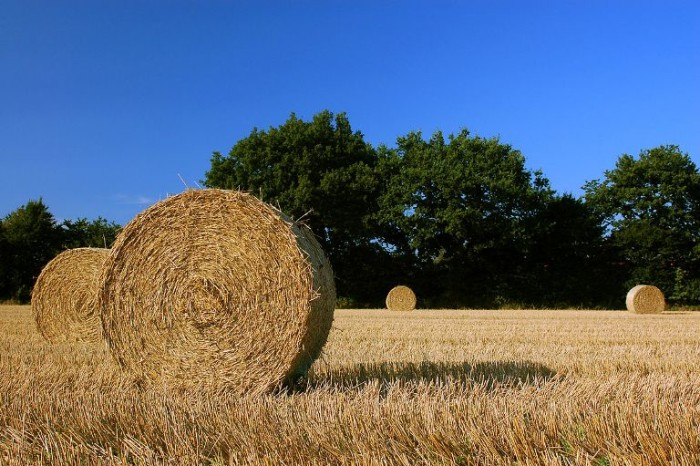 6. Hay or Straw